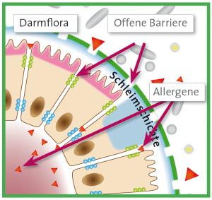 Die Darmschleimhaut bei Allergien