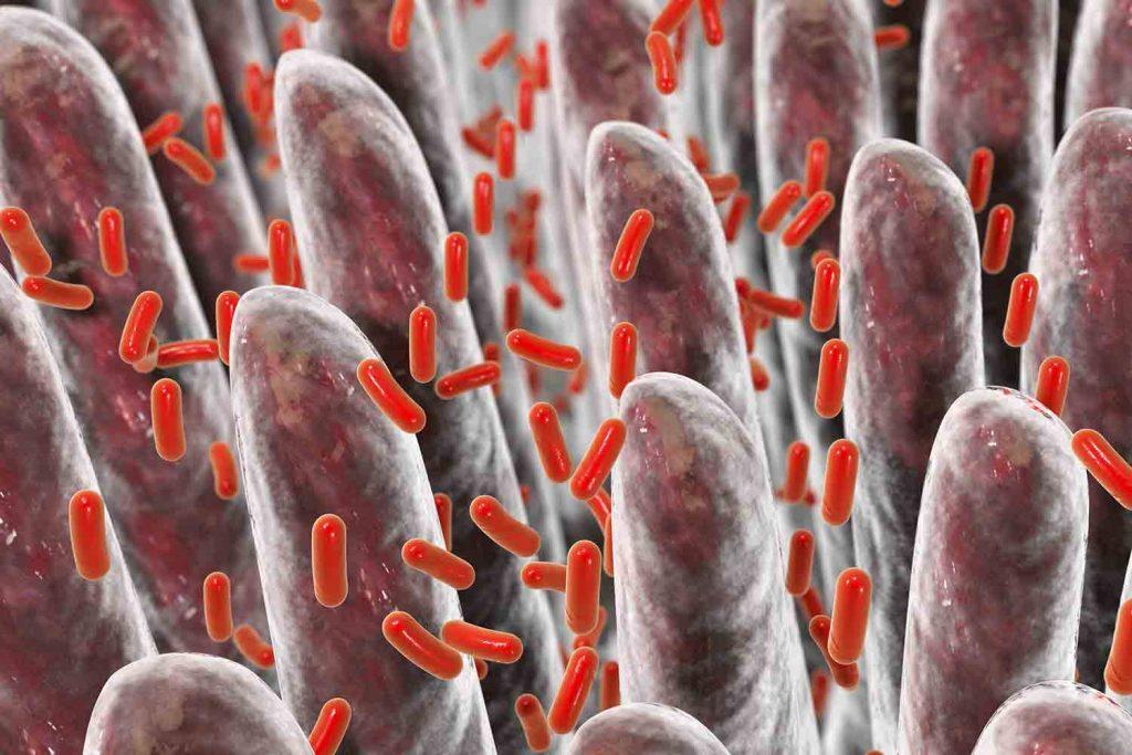 Laktobazillen und Bifidobakterien