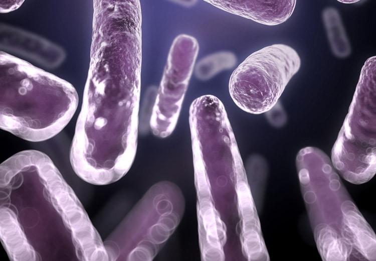 Ist die Darmflora reich an Bacteroidetes-Bakterien, enthalten unsere Ausscheidungen mehr unverbrauchte Kalorien als bei einem Firmicutes-Überschuss.