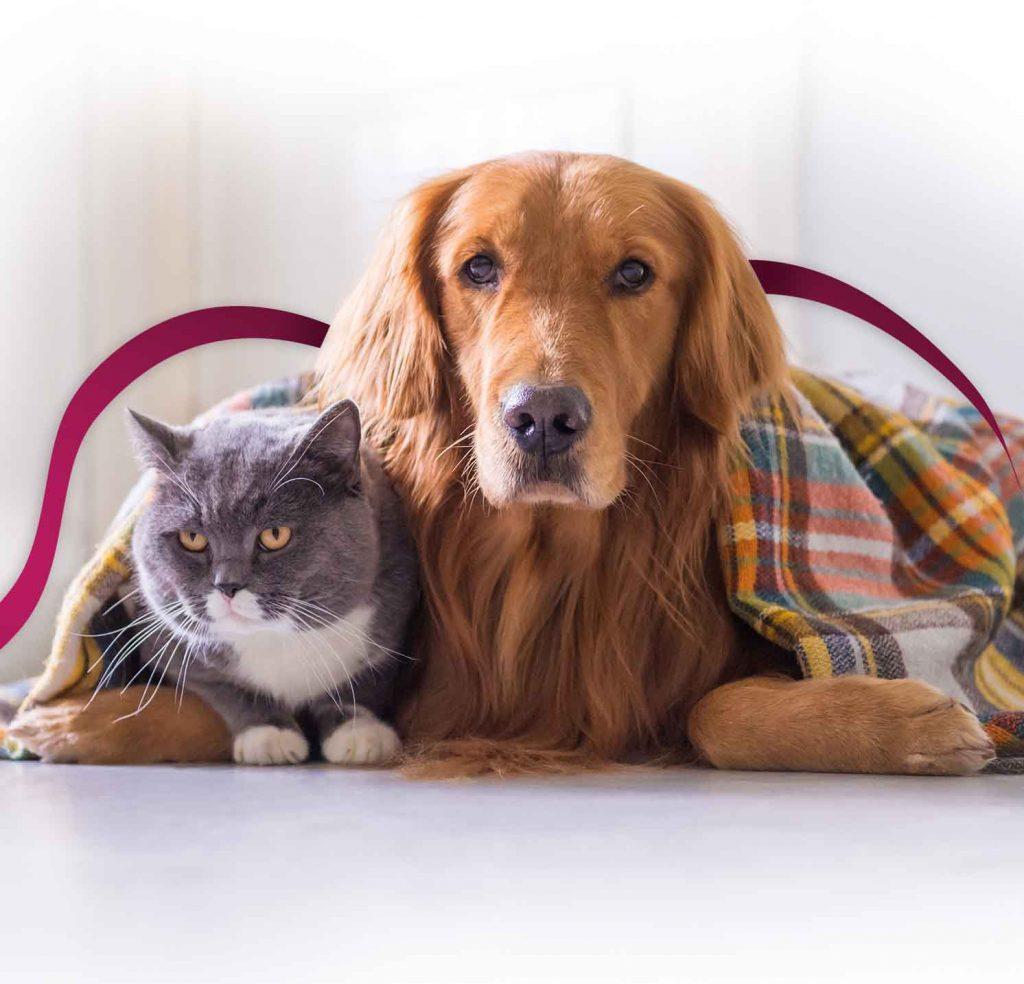 Jeder Haustierbesitzer hat schon erlebt, dass der eigene Vierbeiner mit Darmproblemen kämpft, und besonders häufig äußert sich eine gestörte Verdauung in Durchfall.